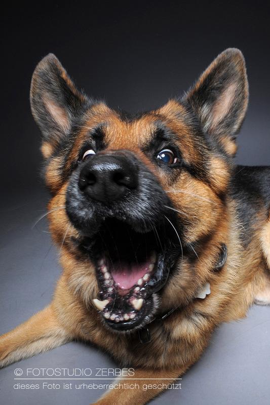 Hunde-Fotoshooting-Schnappfotos-Tierfotograf-Koeln