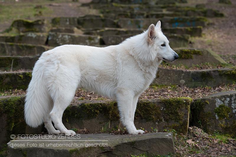 Hunde-Fotoshooting-Outdoor-Tierfotograf-Koeln