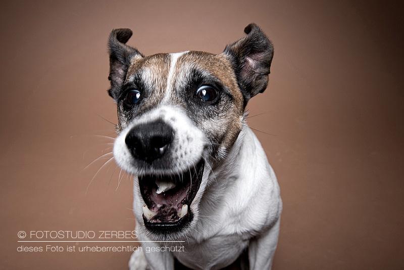 Hunde-Fotografie-Schnappfotos-Tierfotograf-Koeln