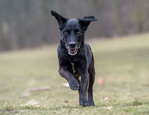Hundefotos mit Joschi Fotoshooting - Tierfotografie in Köln