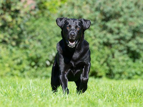 Bewegungsaufnahmen Hund Hundefotoshooting - Tierfotografie Fotostudio Zerbes in Köln