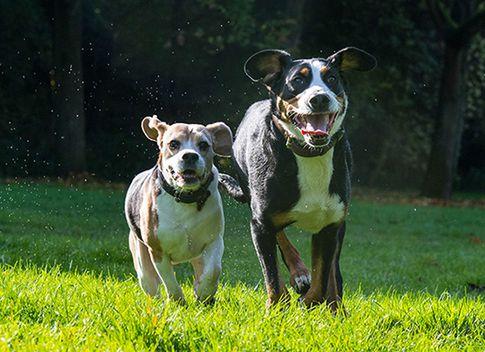 Hundefotoshooting in Köln - Tierfotografie Fotostudio Zerbes in Köln