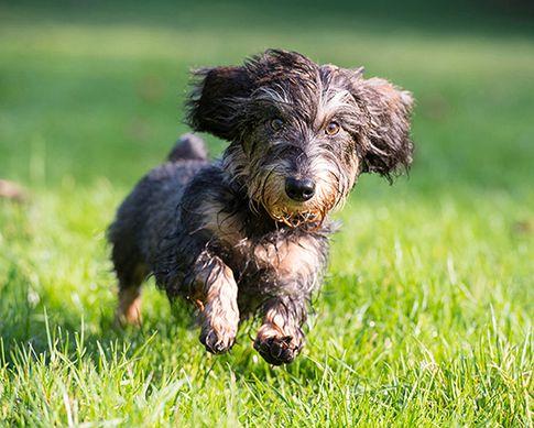 Hundeshooting - Tierfotografie Fotostudio Zerbes in Köln