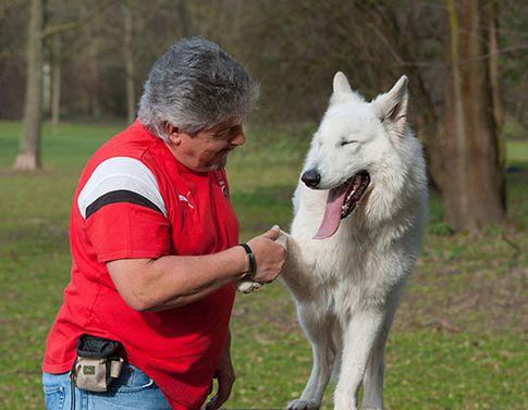 das perfekte Hunde Fotoshooting - Hundefotografie Köln