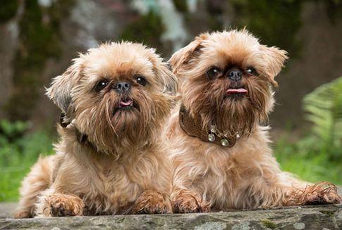 Hunde beim Shooting Fotoshooting - Tierfotografie in Köln