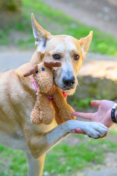 Hunde Fotoshooting in Köln mit Profi-Tierfotograf